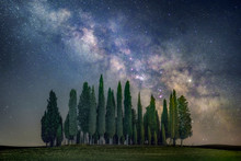 Green Pine Trees And Milky Way Galaxy Illustration