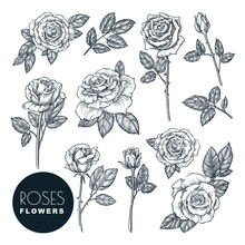 Roses Flowers Set, Vector Sket...