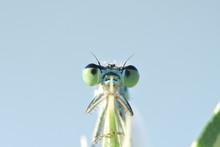 Macro Photograph Of Green Gras...