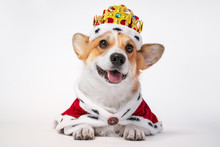 Pretty Cute Corgi Dog Wearing ...