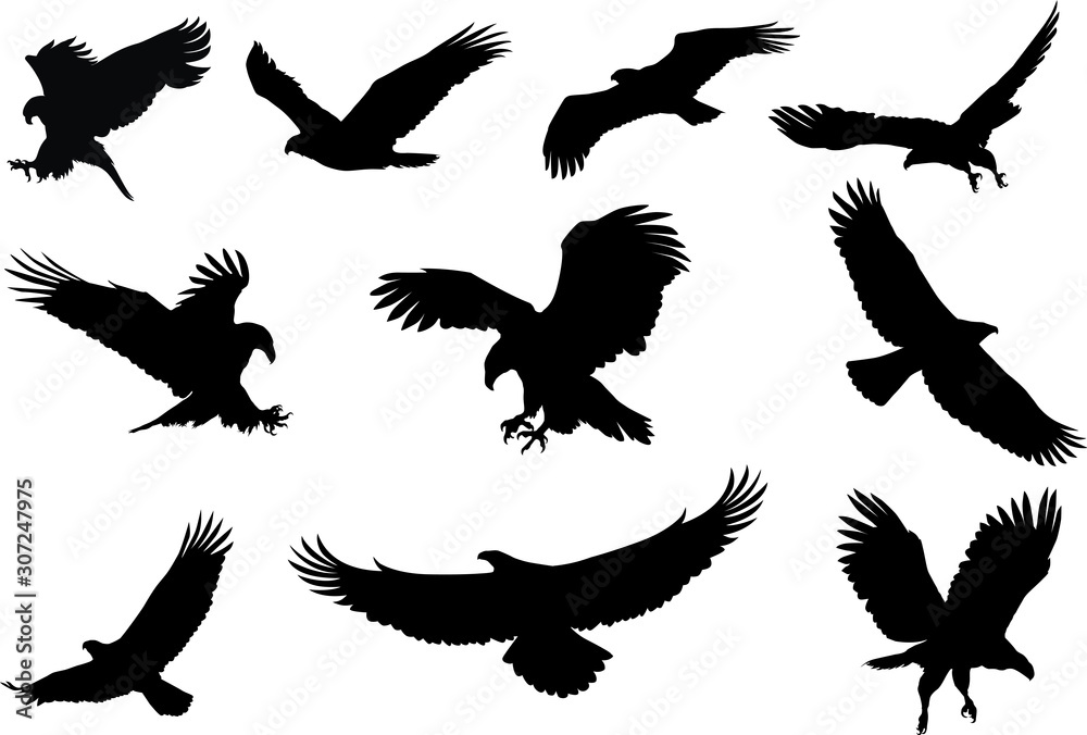 Fototapeta eagle silhouette, fliying bird silhouette