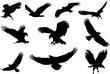 eagle silhouette, fliying bird silhouette