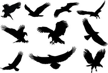 orao silueta, leteća ptica silueta