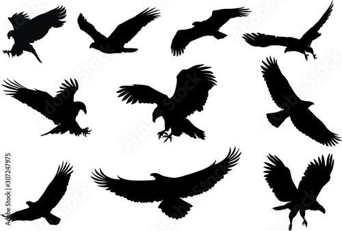 Canvas Print eagle silhouette, fliying bird silhouette