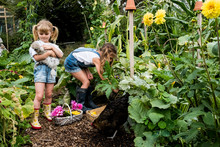 Girls With Chicken Picking Veg...