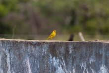 Little Yellow Bird On A Wall