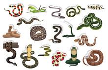 Snake Various Kind Identify Cartoon Vector-01