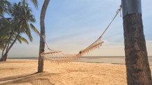 Hammock Between Palm Trees On ...