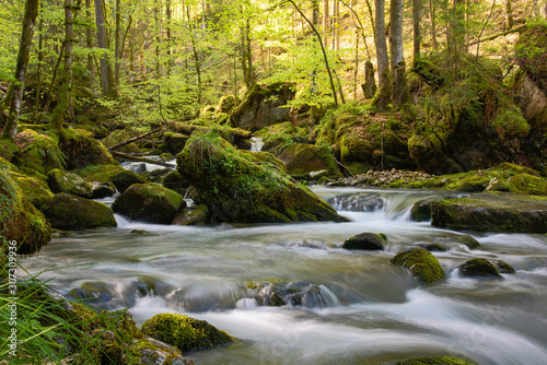 Fototapety, obrazy: river in the forest