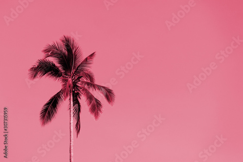 Photo sur Aluminium Rose banbon Palm tree against a sky on a sunny day. Tropical background pink color toned
