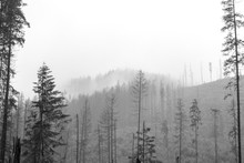 Rainy Forest Zakopane Poland