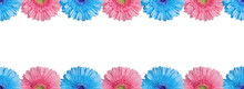 Light Blue And Pink Halves Gerbera Flowers Border On White Background Isolated Close Up, Half Gerber Flower Seamless Pattern, Decorative Frame, Floral Ornament Line, Daisies Decoration, Copy Space
