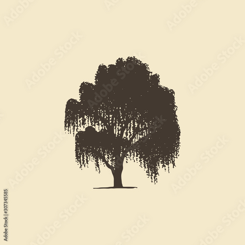 Tablou Canvas Willow or Birch, hand drawn silhouette
