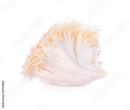 Fotografia lion mane mushroom isolated on white background.