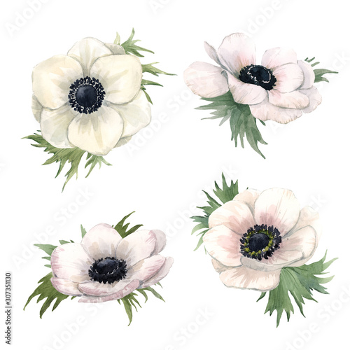 Beautiful watercolor floral set with isolated anemone flowers Wallpaper Mural