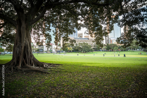 Domain, a heritage-listed 34-hectare area of open space located on the eastern f Canvas Print
