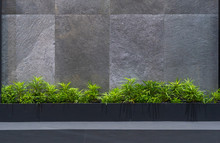 Natural Green Tree House Plants With The Granite On The Black Granite Stone Wall Exterior For Home And Living Decoration. Concept Environment House Contemporary