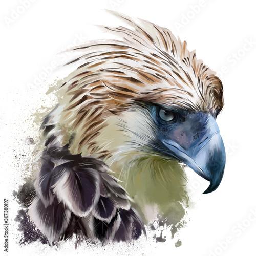 Fotografie, Tablou Philippine harpy, head. Watercolor drawing