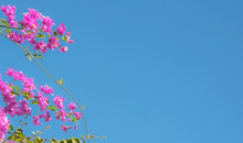 Pink Flower With Blue Sky