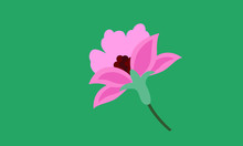 Lotus Flower Isolated On Green Background