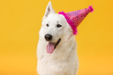 Cute Funny Dog With Party Hat ...