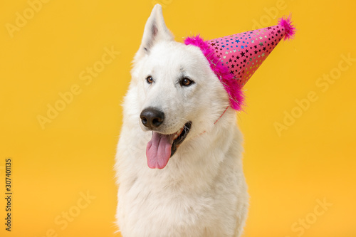 Obraz Cute funny dog with party hat on color background - fototapety do salonu