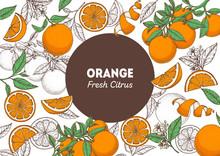 Orange Fruit Hand Drawn Package Design. Orange Tree Frame Template. Vector Illustration. Menu Design, Brochure Illustration. Colorful Design. Citrus Pattern Illustration. Can Used For Packaging Design