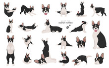 Boston Terrier Clipart. Dog He...