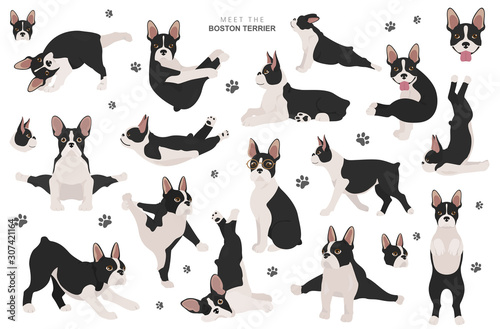Comics Boston terrier clipart. Dog healthy silhouette and yoga poses set