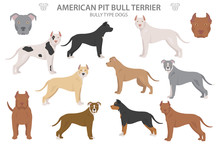 Pit Bull Type Dogs. American P...