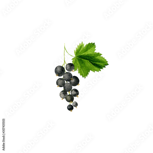 watercolor drawing blackcurrant Canvas Print