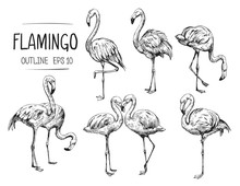 Flamingo Sketch. Hand Drawn Illustration Converted To Vector. Outline With Transparent Background