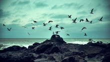 Beautiful Scenery Of A Flock Of Seagulls Taking Off From A Huge Rock Formation Near The Sea