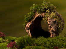 Hollow Tree Trunk Background