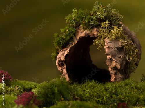 Obraz Hollow tree trunk background - fototapety do salonu