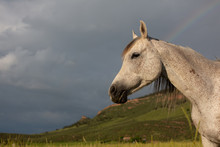 Horse Standing In Field With R...
