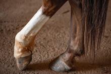 Horse Paw
