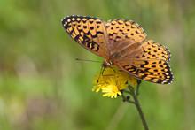 Butterfly On Wildflowers