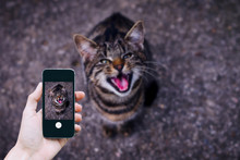 Picture Of My Cat By A Mobile ...