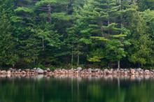 Forest At Jordan Pond Acadia