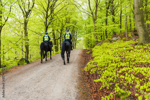 Canvas Print Policewomen on horses in forest
