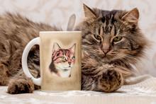 Young Furry Cat Lies Near A Mug With Tea. On The Mug Painted Cat_