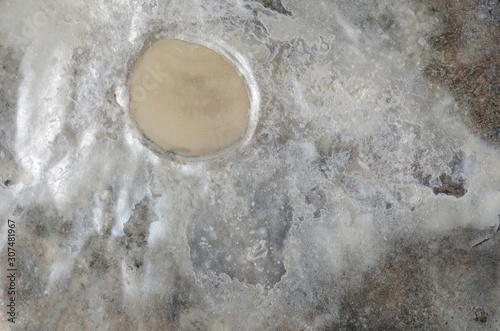 close up ocean shell structure background