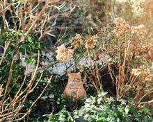 Big Ginger Cat Sits In Garden In Fall Season