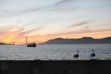Two Seagulls Near Golden Gate Bridge