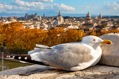 Seagull in Rome Canvas Print