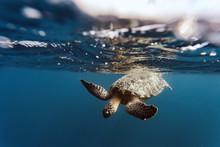 Indonesia, Bali, Underwater Vi...