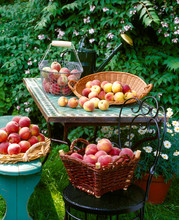 Baskets Of Fresh Peaches On Table In Garden