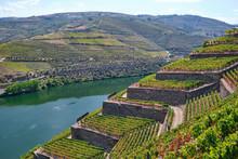 Portugal, Douro Valley, Terrac...