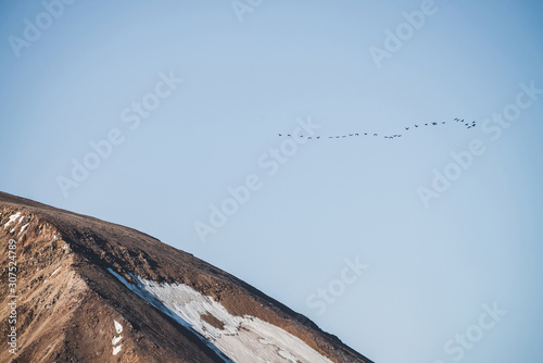 Obraz na plátně  Flock of birds in blue sky fly over snowy mountain ridge